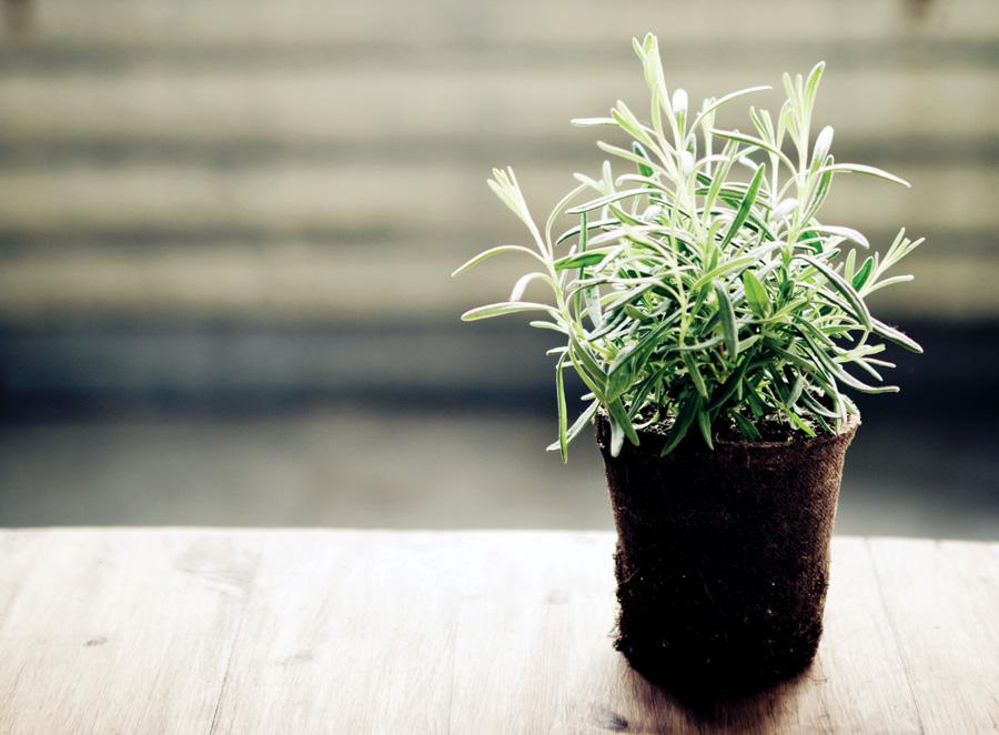 Rosemary, Beauty Products using natural herbs, antioxidants